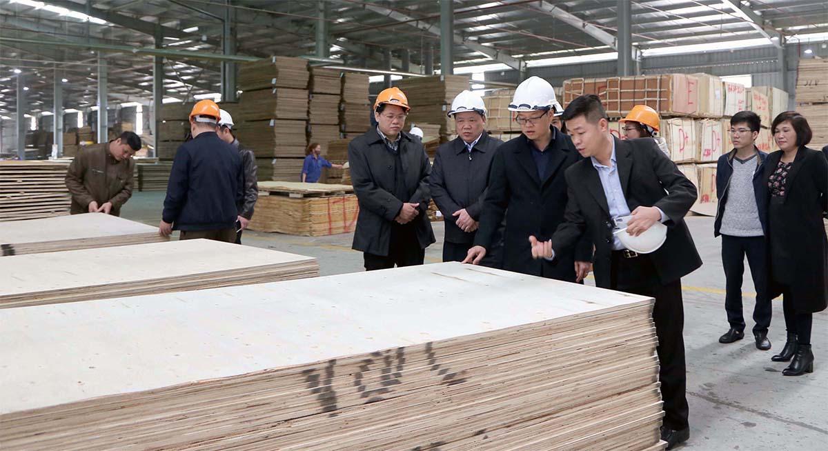 Nhà máy gỗ ván ép tại khu công nghiệp Thanh Bình
